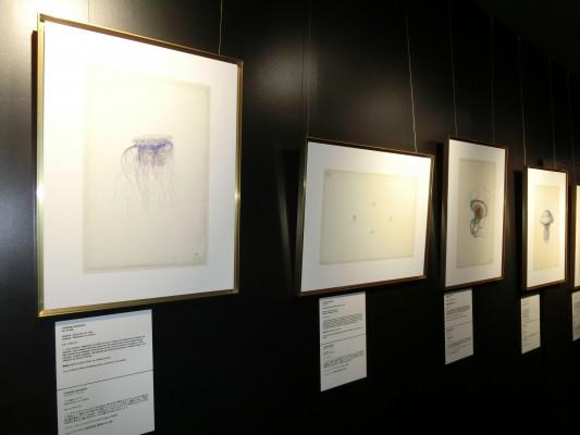 「クラゲと詩人」展 開催