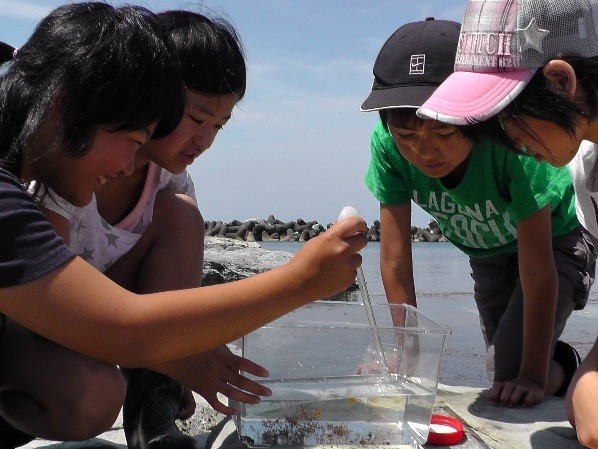 「カギノテクラゲ採集とクラゲ学習会」の開催のお知らせ