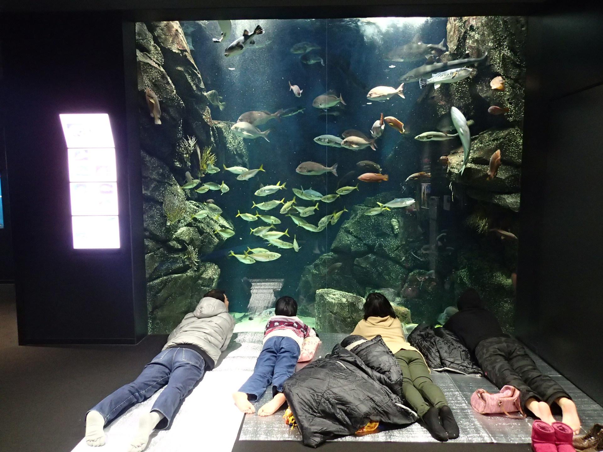 冬のお泊り水族館 in かもすい(12月分) 応募受付中