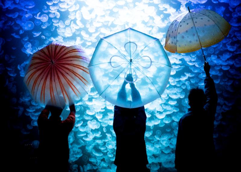 コラボ商品 雨空を泳ぐクラゲの傘について